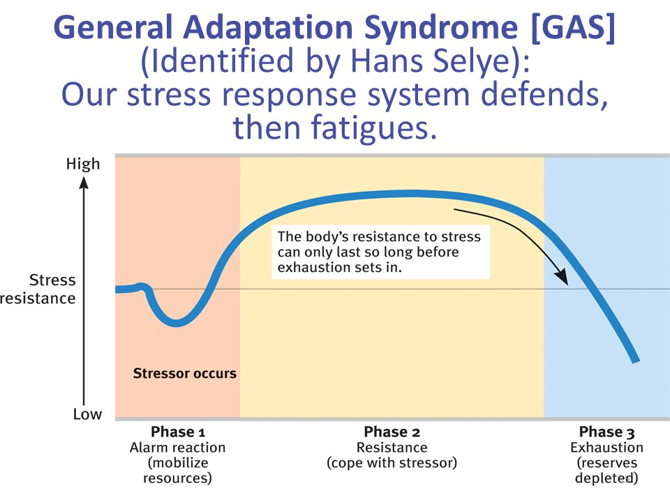 General Adaptation Syndrome [GAS] (Identified by Hans Selye): Our stress response system defends, then fatigues.